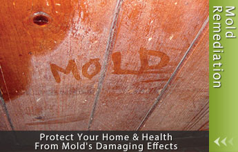 Protect Your Home & Health From Mold's Damaging Effects.
