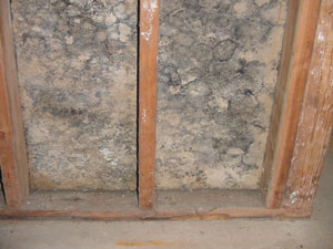 mold remediation services mold testing soda blasting to remove mold